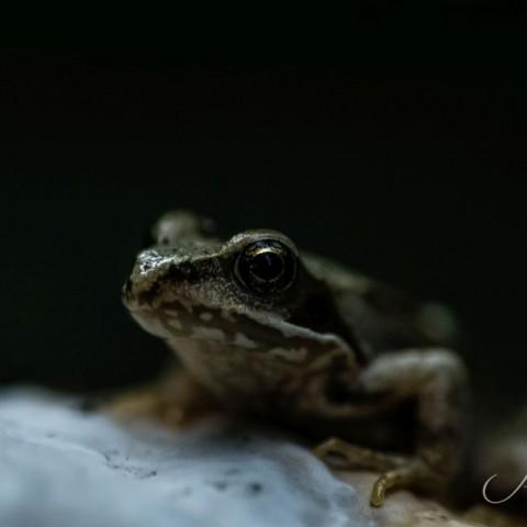 Froschen